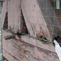 Feuchtigkeit hat dem alten Eichenholz stark zugesetzt.